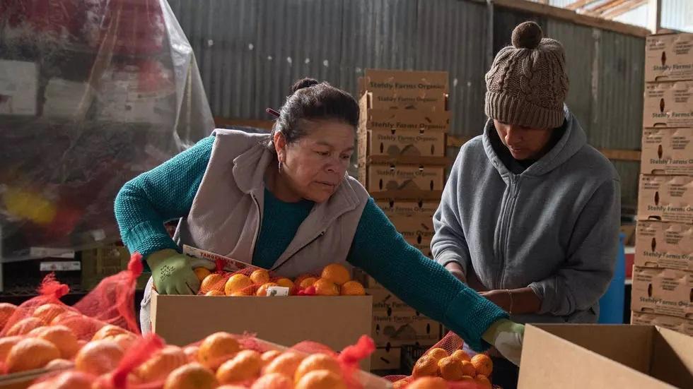 بحران کشاورزان آمریکا در ایام کرونا، تجهیزات محافطتی نداریم