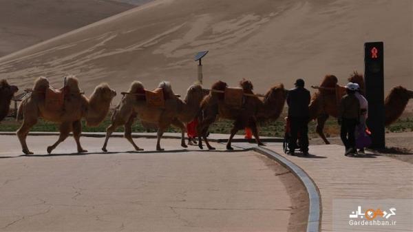 رونمایی از اولین چراغ هدایت برای رفت وآمد شترها